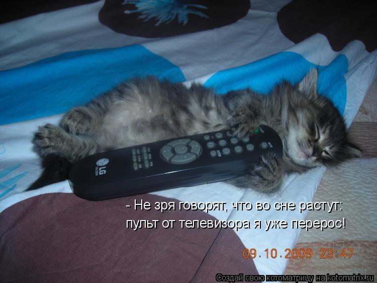 Котоматрица: - Не зря говорят, что во сне растут:  пульт от телевизора я уже перерос!