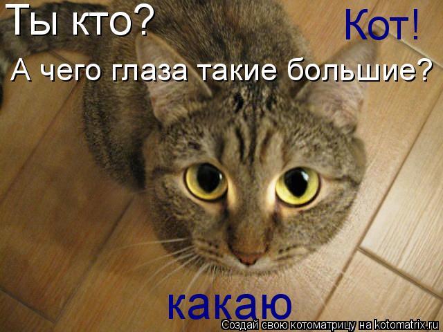 Котоматрица: Ты кто? Кот! А чего глаза такие большие? какаю