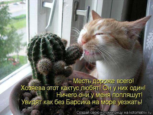 Котоматрица: Месть дороже всего!  Ничего они у меня попляшут! Увидят как без Барсика на море уезжать! Хозяева этот кактус любят! Он у них один!