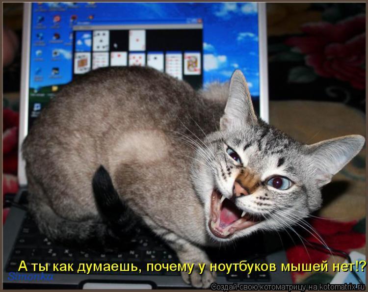 Котоматрица: А ты как думаешь, почему у ноутбуков мышей нет!?