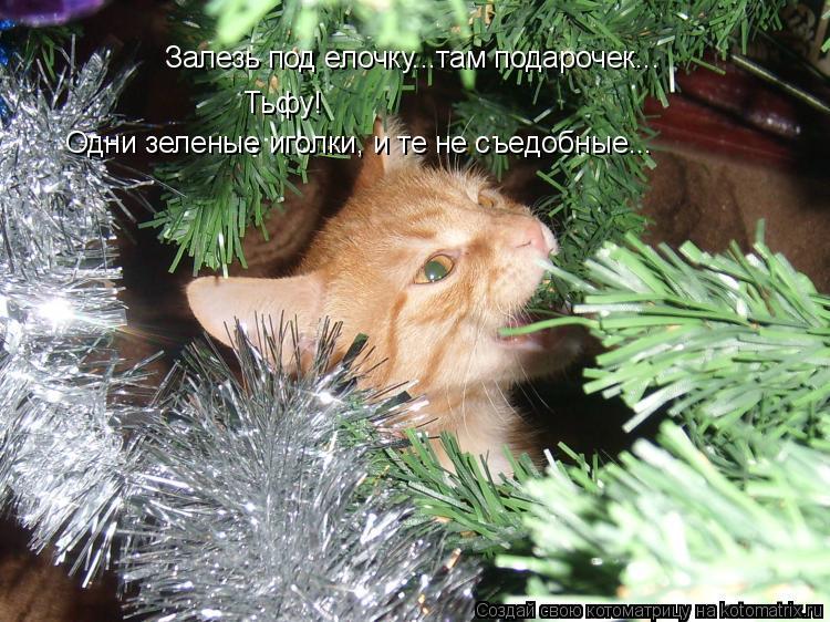 Котоматрица: Залезь под елочку...там подарочек... Тьфу! Одни зеленые иголки, и те не съедобные...