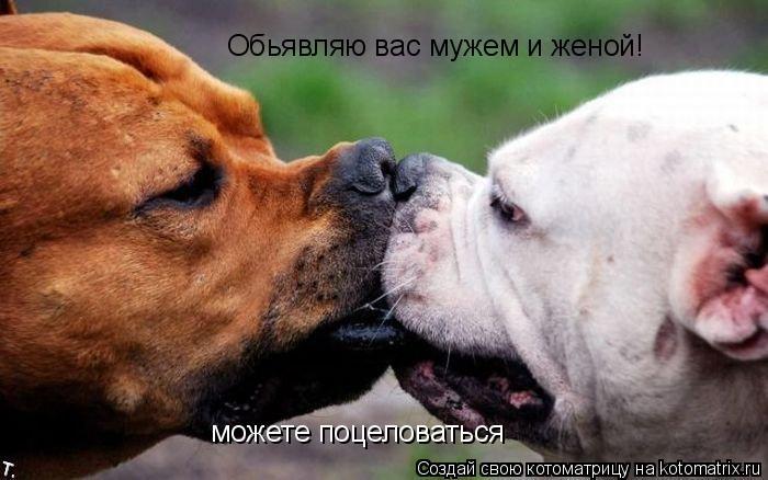 Котоматрица: Обьявляю вас мужем и женой! можете поцеловаться