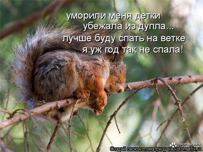 Котоматрица: уморили меня детки убежала из дупла... лучше буду спать на ветке я уж год так не спала!