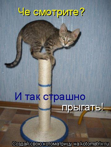 Котоматрица: Че смотрите? И так страшно прыгать!!! И так страшно прыгать!