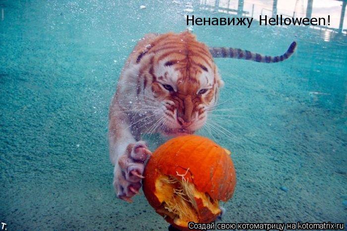 Котоматрица: Ненавижу Helloween!