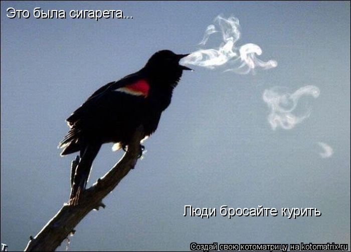 Котоматрица: Это была сигарета... Люди бросайте курить