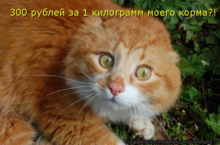 Котоматрица: 300 рублей за 1 килограмм моего корма?!