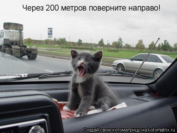 Котоматрица: Через 200 метров поверните направо!
