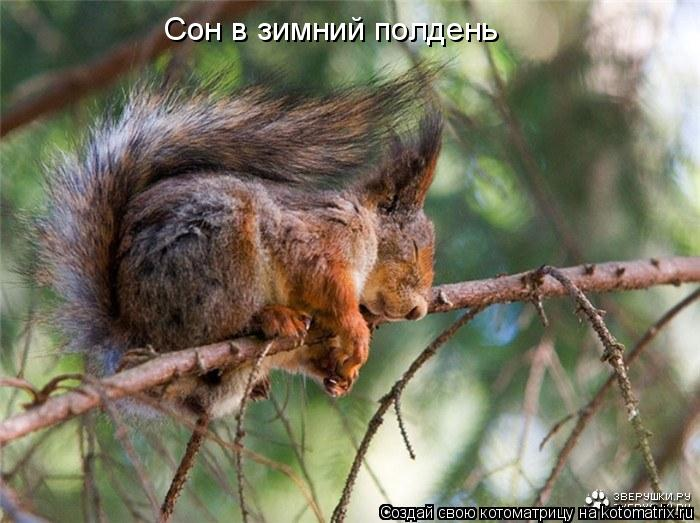 Котоматрица: Сон в зимний полдень