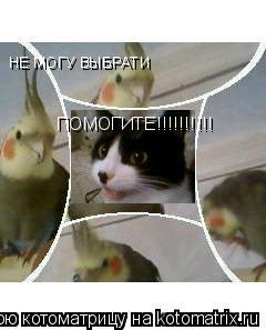 Котоматрица: НЕ МОГУ ВЫБРАТИ НЕ МОГУ ВЫБРАТИ ПОМОГИТЕ!!!!!!!!!! ПОМОГИТЕ!!!!!!!!!! Каво выбрати????