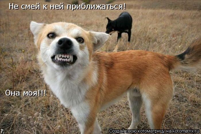 Котоматрица: Не смей к ней приближаться! Она моя!!!