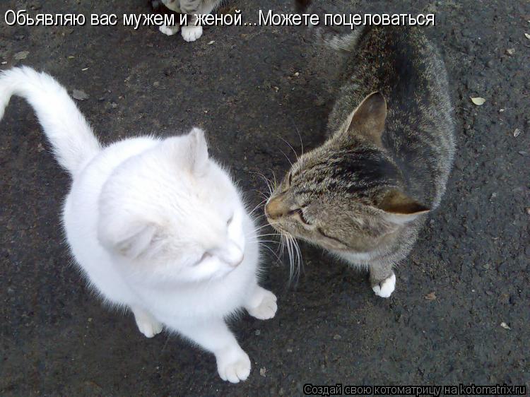 Котоматрица: Обьявляю вас мужем и женой...Можете поцеловаться