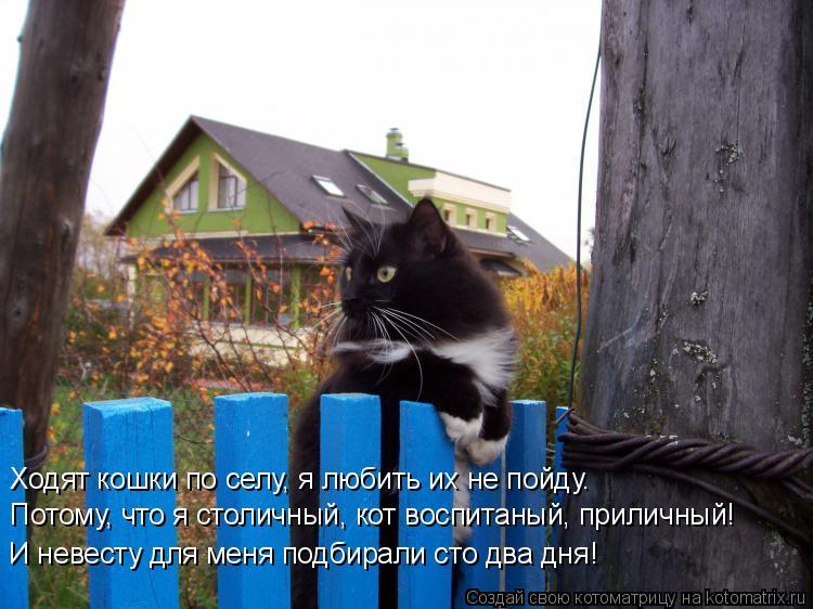 Котоматрица: Ходят кошки по селу, я любить их не пойду.  Потому, что я столичный, кот воспитаный, приличный! И невесту для меня подбирали сто два дня!
