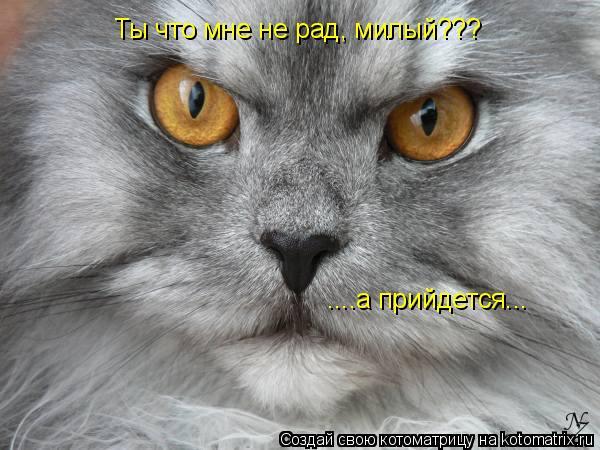 Котоматрица: Ты что мне не рад, милый??? ....а прийдется...