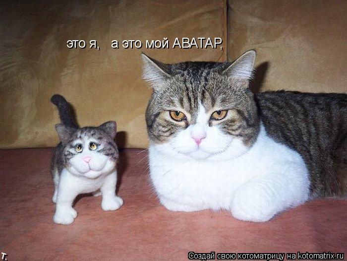 Котоматрица: это я,   а это мой АВАТАР,