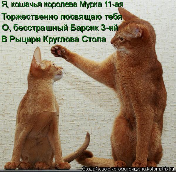 Котоматрица: Я, кошачья королева Мурка 11-ая Я, кошачья королева Мурка 11-ая Торжественно посвящаю тебя О, бесстрашный Барсик 3-ий В Рыцири Круглова Стола