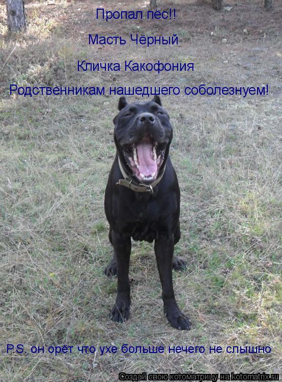 Котоматрица: Пропал пёс!! Масть Чёрный Кличка Какофония Родственникам нашедшего соболезнуем! P.S. он орёт что ухе больше нечего не слышно