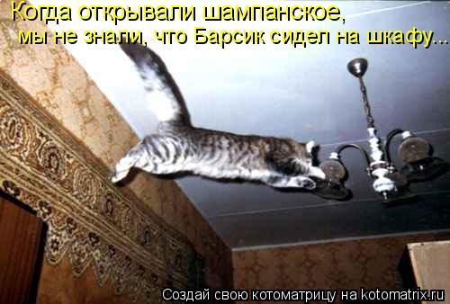 Котоматрица: Когда открывали шампанское, мы не знали, что Барсик сидел на шкафу...