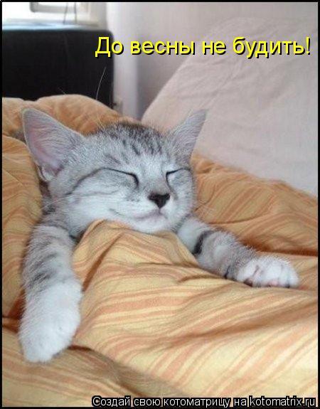 Котоматрица: До весны не будить!