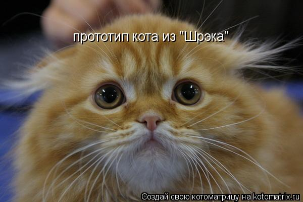 """Котоматрица: прототип кота из """"Шрэка"""""""