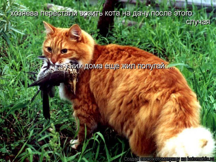 Котоматрица: хозяева перестали возить кота на дачу после этого  случая у них дома еще жил попугай.....