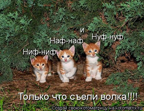 Котоматрица: Ниф-ниф Наф-наф и Нуф-нуф Только что съели волка!!!!