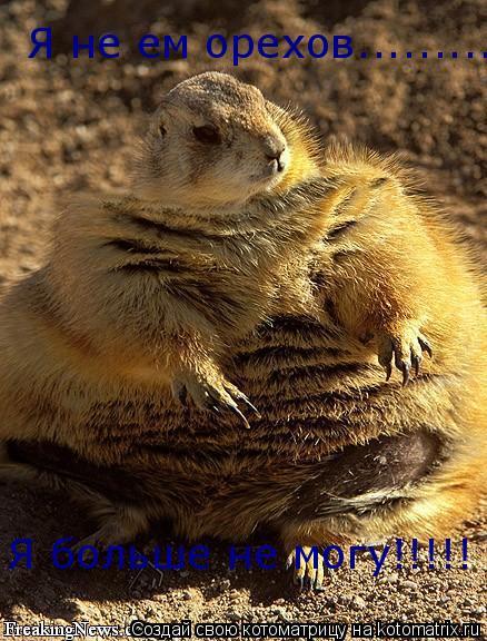 Котоматрица: Я не ем орехов......... Я больше не могу!!!!!