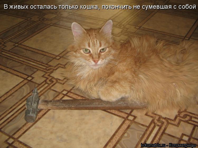 Котоматрица: В живых осталась только кошка, покончить не сумевшая с собой
