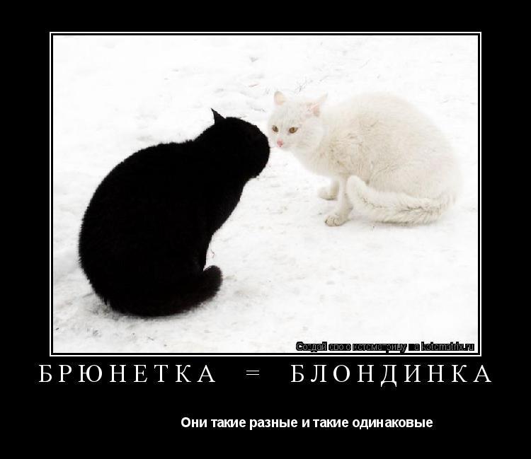Котоматрица:    БРЮНЕТКА  =  БЛОНДИНКА                        Они такие разные и такие одинаковые