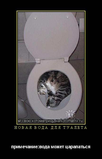 Котоматрица: новая вода для туалета примечание:вода может царапаться