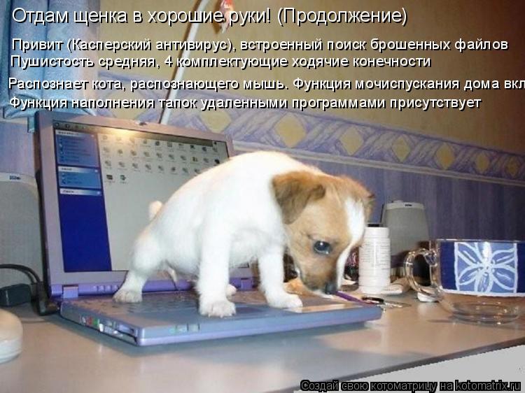 Котоматрица: Отдам щенка в хорошие руки! (Продолжение) Привит (Касперский антивирус), встроенный поиск брошенных файлов Пушистость средняя, 4 комплектую