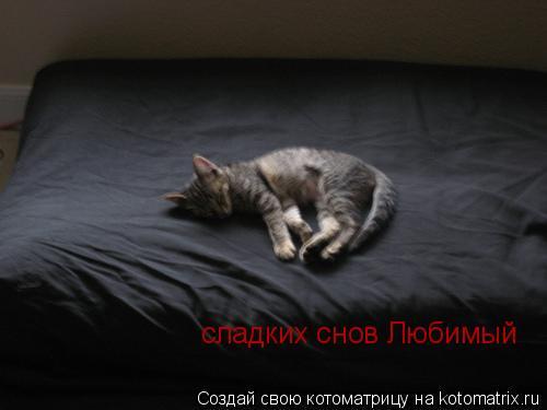 Котоматрица: сладких снов Любимый