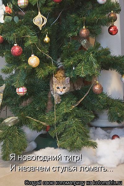 Котоматрица: Я новогодний тигр!  И незачем стулья ломать...