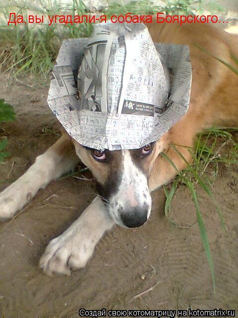 Котоматрица: Да,вы угадали-я собака Боярского...