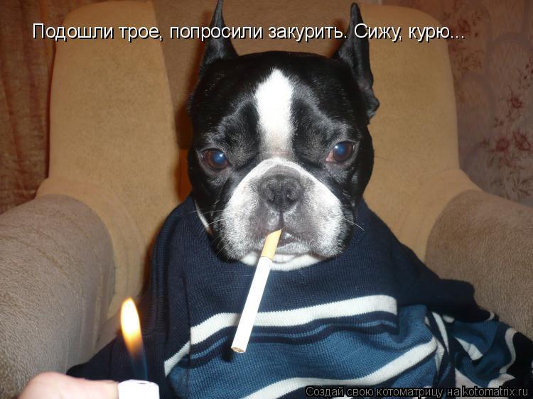Котоматрица: Подошли трое, попросили закурить. Сижу, курю...