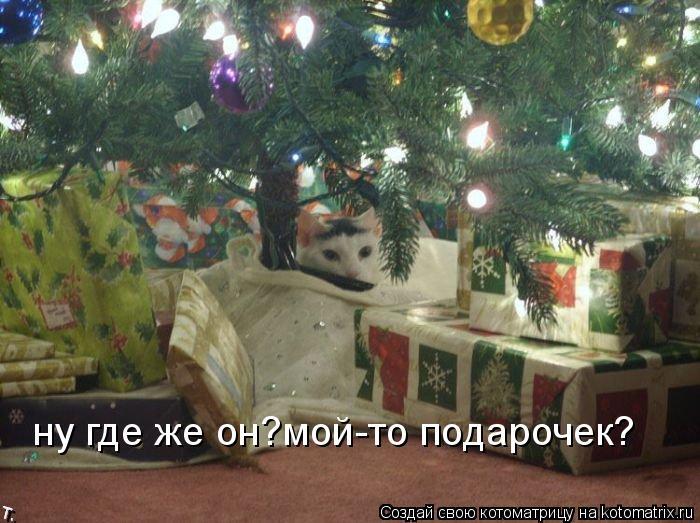 Котоматрица: ну где же он?мой-то подарочек?