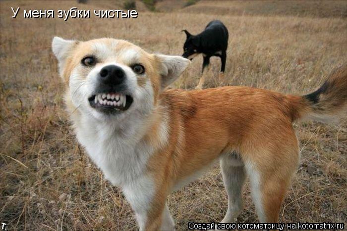 Котоматрица: У меня зубки чистые