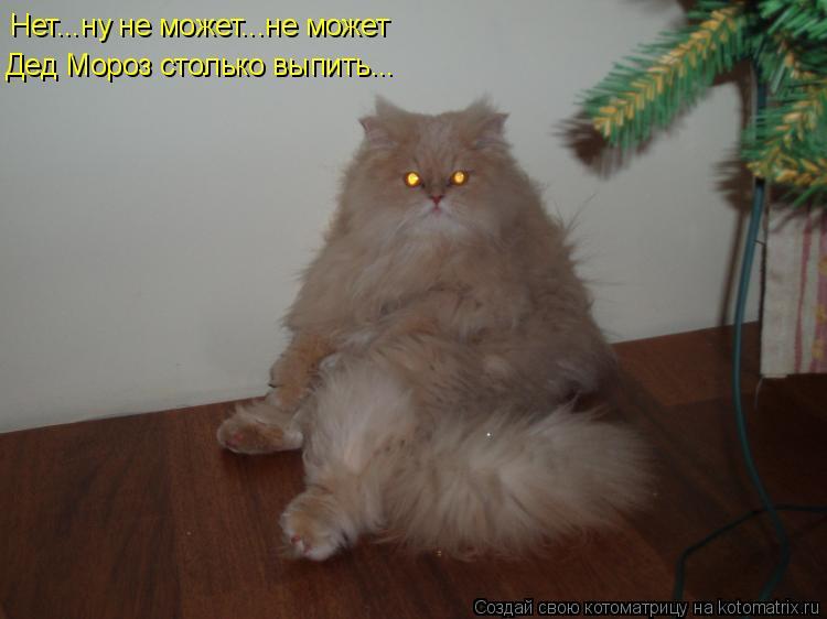 Котоматрица: Нет...ну не может...не может Дед Мороз столько выпить...