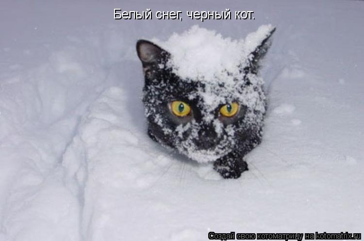 Котоматрица: Белый снег, черный кот.