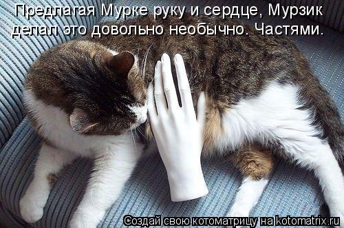 Котоматрица: Предлагая Мурке руку и сердце, Мурзик  делал это довольно необычно. Частями.