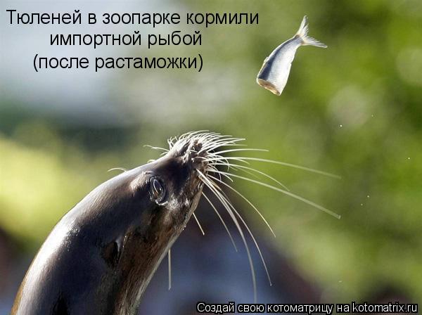 Котоматрица: Тюленей в зоопарке кормили импортной рыбой (после растаможки)