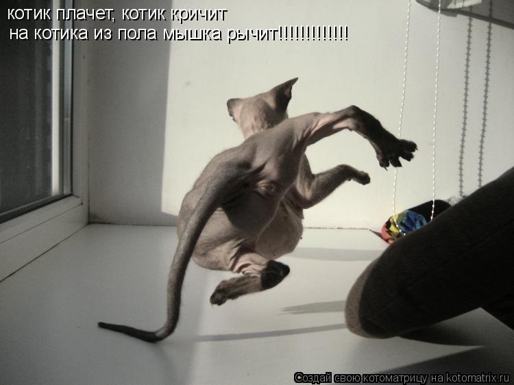 Котоматрица: котик плачет, котик кричит на котика из пола мышка рычит!!!!!!!!!!!!!