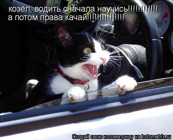 Котоматрица: козёл, водить сначала научись!!!!!!!!!!!! а потом права качай!!!!!!!!!!!!!!!