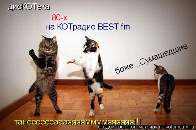 Котоматрица: дисКОТека 80-х на КОТрадио BEST fm танееееееаааяяяяммммяяяяяя!!! боже...Сумашедшие