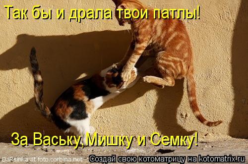 Котоматрица: Так бы и драла твои патлы! За Ваську,Мишку и Семку!