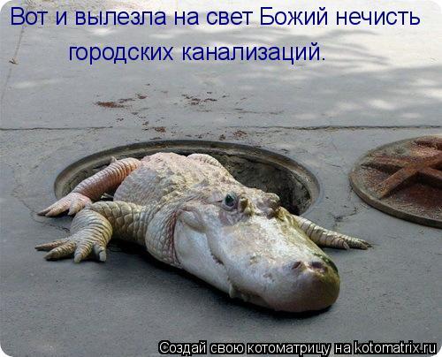 Котоматрица: Вот и вылезла на свет Божий нечисть  городских канализаций.
