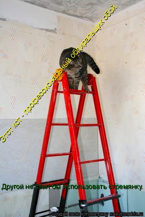 Котоматрица: Этот кот - профессиональный обдиральщик обой. Другой не стал бы использовать стремянку.