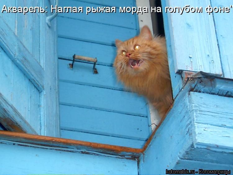 """Котоматрица: Акварель: Наглая рыжая морда на голубом фоне"""""""
