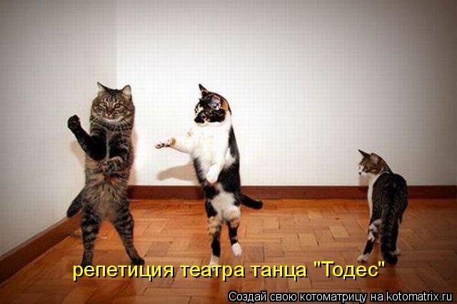 "Котоматрица: репетиция театра танца ""Тодес"""