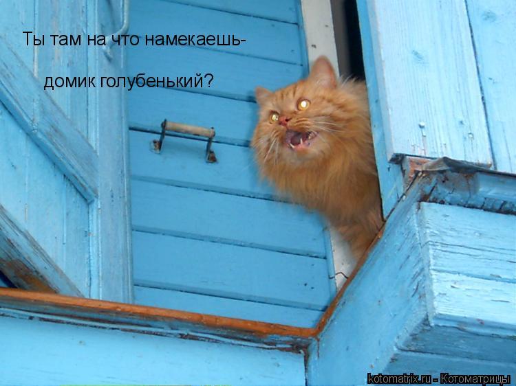 Котоматрица: Ты там на что намекаешь-  домик голубенький?